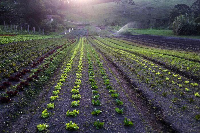 Horta orgânica em Gonçalves MG - A Senhora das Especiarias.